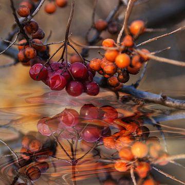 Over het water -Autumnal berry arrangement van Christine Nöhmeier