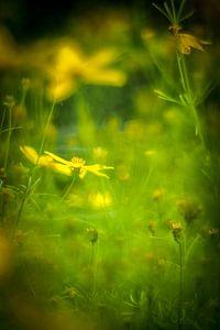 Gele bloemen van