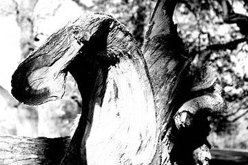 Deel von een boom van Wolf-Dieter Werner