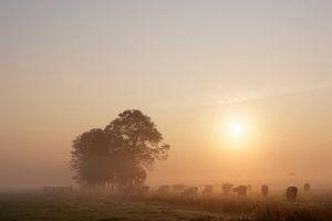 Nederlands polderlandschap II van