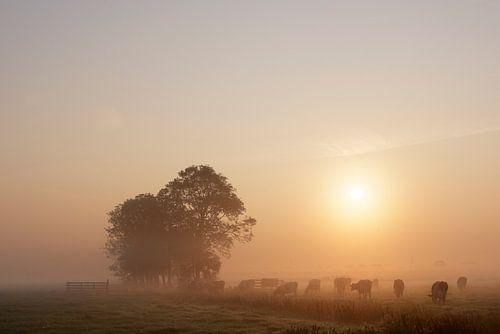 Nederlands polderlandschap II