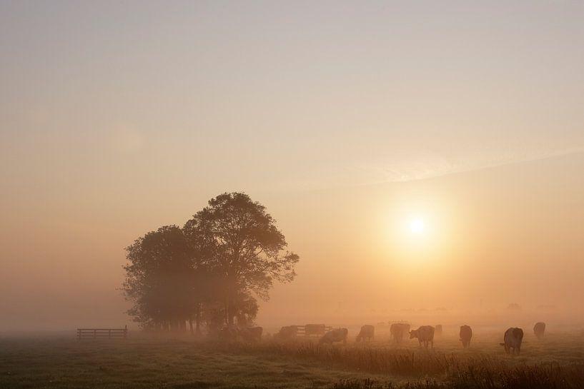 Nederlands polderlandschap II van Mark Leeman