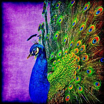 Blauwe pauw van Leopold Brix