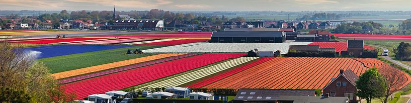 Tulpenfelder bei Egmond von Frans Lemmens
