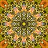 Chinese Rose van Frans Blok thumbnail