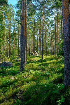 Zweeds landschap 013 sur