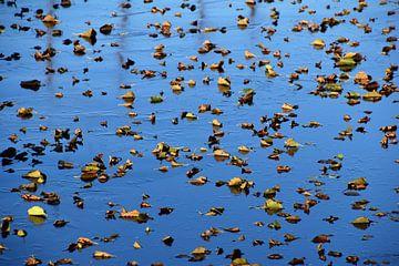 Herfstblad op ijs van Susan Dekker