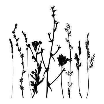 Botanische illustratie met planten, wilde bloemen en grassen 2.  Zwart wit.