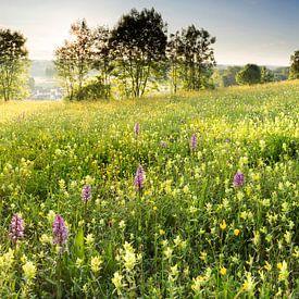 Orchideeënweide van Bob Luijks