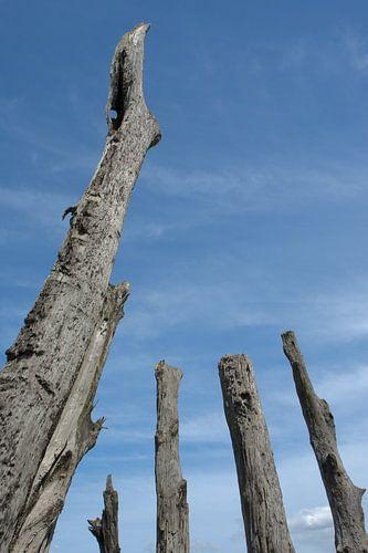 Bomen tot in de hemel van