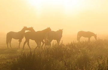 Paarden in de mist van Sander van der Werf