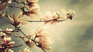 Magnolia sur Bart Ceuppens