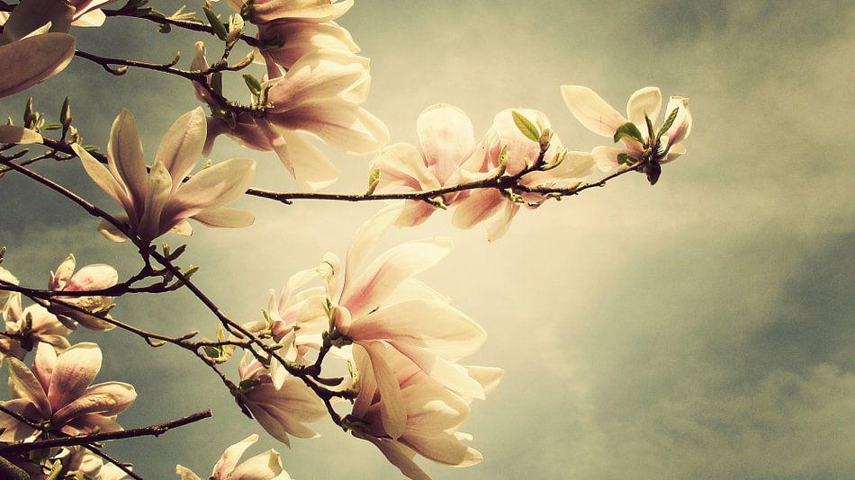 Magnolia van Bart Ceuppens