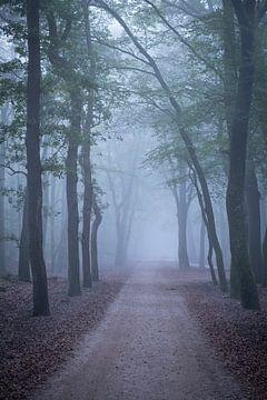 Weg durch einen Buchenwald an einem nebligen Herbstmorgen von Sjoerd van der Wal