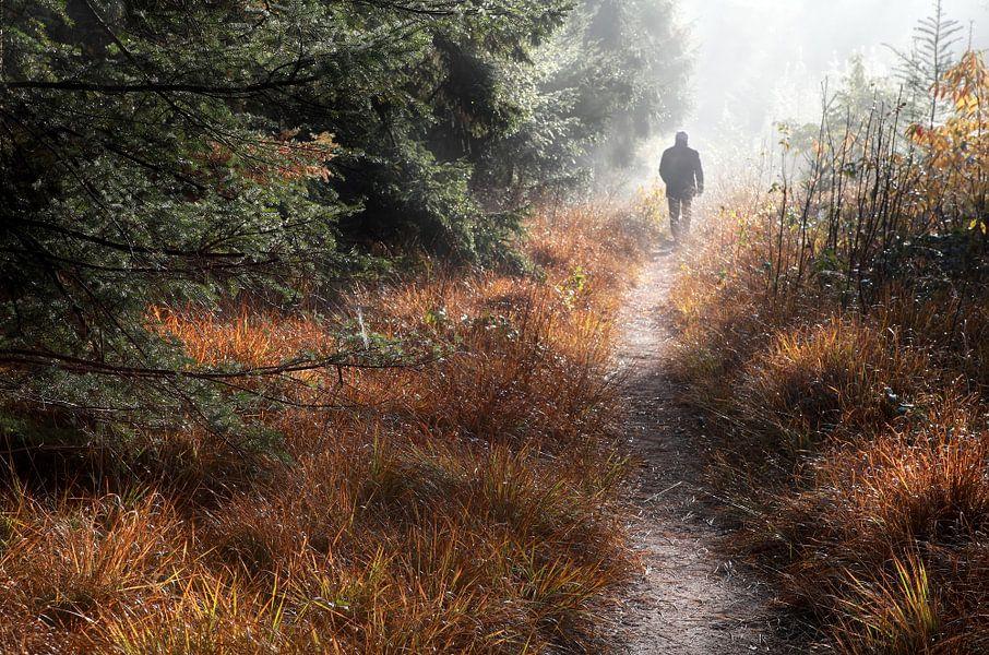 Walk in the forest heaven van Olha Rohulya