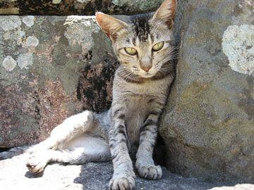 Kat in Sri Lanka van Myrthe Visser-Wind