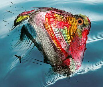Een vis van Gertrud Scheffler