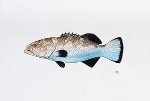 Fisch - Serie A