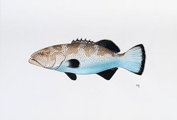 Fisch - Serie A von Martino Romijn