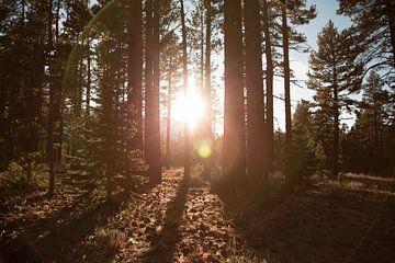 Zonlicht door de bomen van Laurance Didden