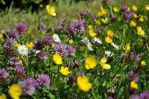 Fiori tricolori: geel, paars en wit
