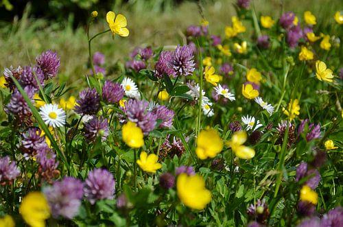Fiori tricolori: geel, paars en wit van