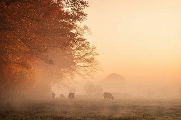 Koeien in de mist bij zonsopgang van Marlou Beimers