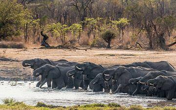 Trinkende Elefanten im Hwange NP, Simbabwe von Paul de Roos