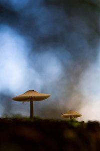 Twee paddenstoelen op bosbodem van