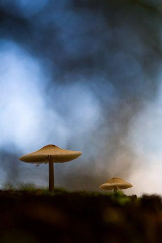 Twee paddenstoelen op bosbodem