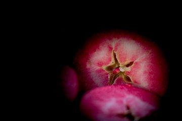 Red Love Appels van Anne Van Opdorp