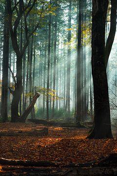 Lichtshow in het Speulderbos van Eelke Brandsma