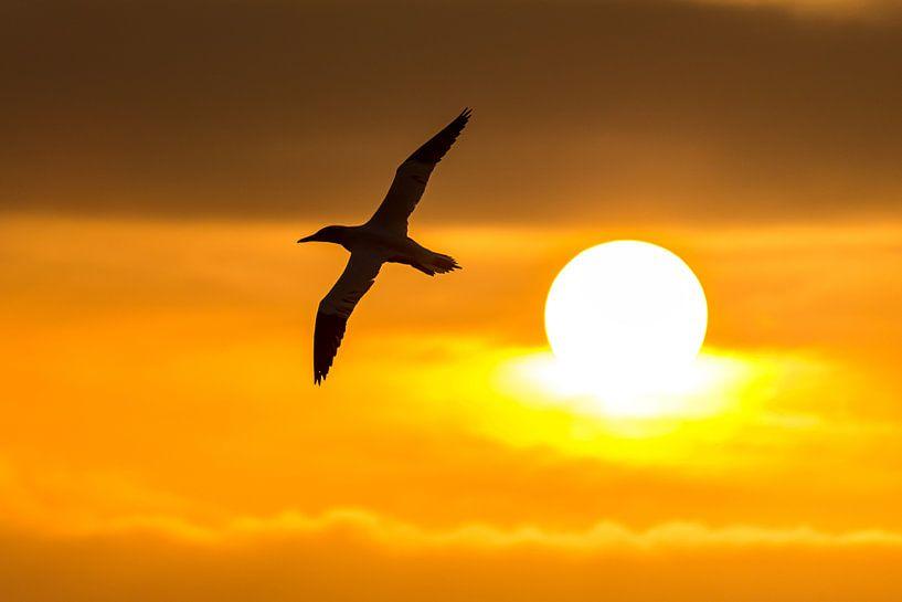 Reis naar de zon als Icarus van Gerry van Roosmalen