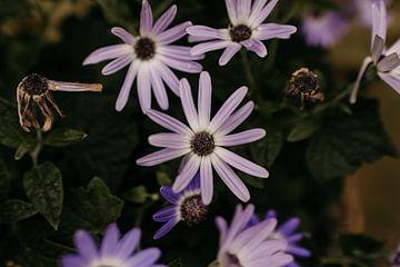 Kleine violette Gartenblume