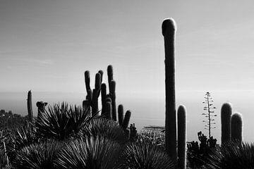 Cactuses van