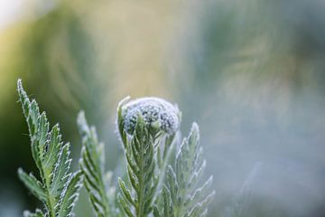 blanc et vert sur Tania Perneel
