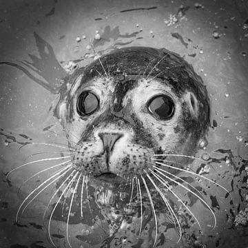 Gewone zeehond van Frans Lemmens