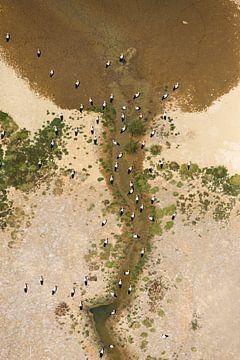 Ooievaars gezien uit de lucht von AGAMI Photo Agency