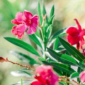 Bloemen van Laura de Roeck