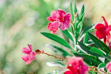 Blumen von Laura de Roeck