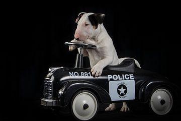 Bull terrier pup bij de politie. von Esther Bax