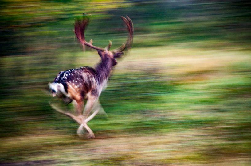 Herten sprint van Ton de Koning