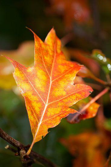 herfstblad close- up met duidelijke aderen