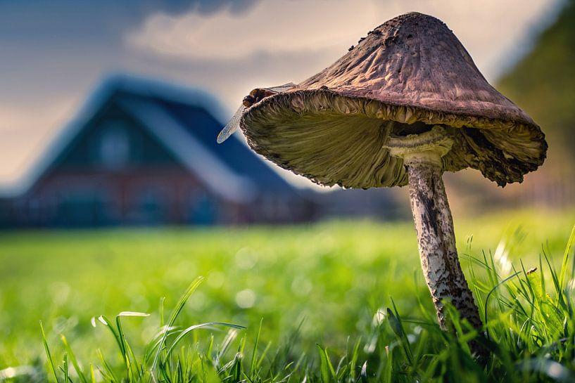 03 paddo rovershut Texel van Texel360Fotografie Richard Heerschap
