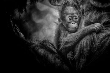 Mutter und Kind Orang-Utan. von Tilly Meijer
