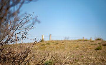 Sperling auf einem Ast im Gebüsch 2 von Percy's fotografie