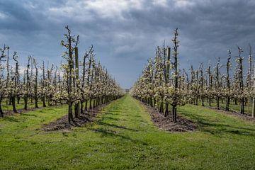 Fruitboomgaard met fraaie lucht von Moetwil en van Dijk - Fotografie