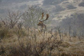 Damhert in de mist van Wim van der Wind