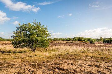 Solitaire struik in Nederlands natuurgebied van Ruud Morijn