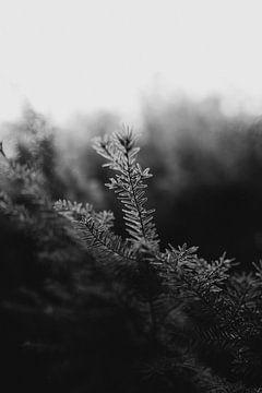 Der Wald im Winter von Eke Salomé